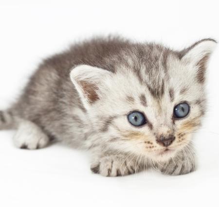 Har du frågor om katt i en hyreslägenhet?