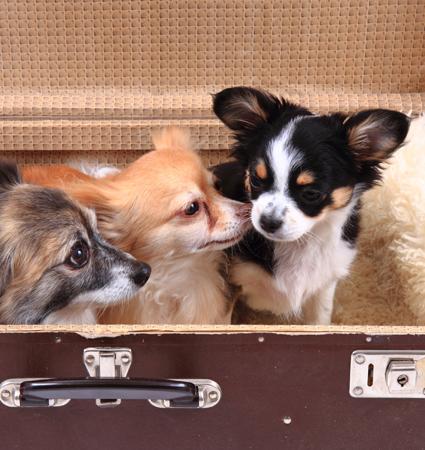 Ska du flytta? Hur går det med hundarna?