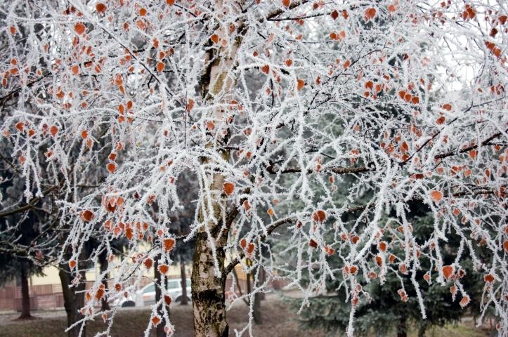 Frosten kommer. Se till att vinterförbereda trädgården.