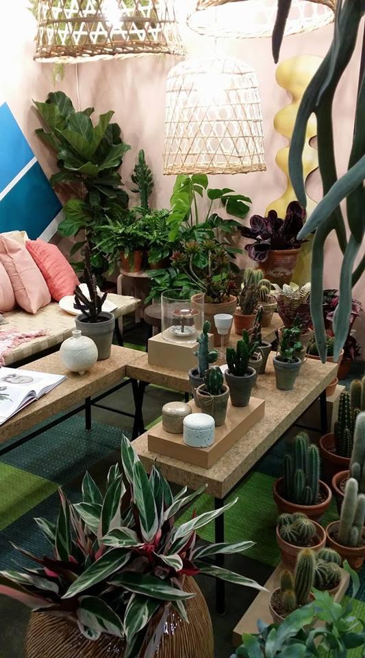 Du kan fylla din balkong med kaktusar och andra suckulenter