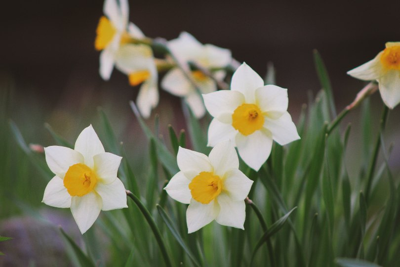 Blommor på balkongen? Få fler tips på BostadsPortal.se